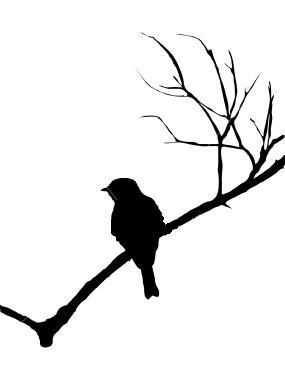 Vogeltje Op Tak Silhouet Vogels Tekenen Prachtige Schilderijen