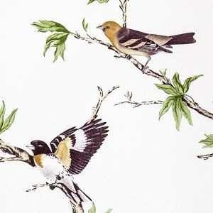 Villa Fiori Kleurplaten Vogeltjes En Kleuren