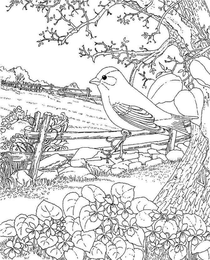 Adult Coloring Page Spring Met Afbeeldingen Kleurplaten Adult