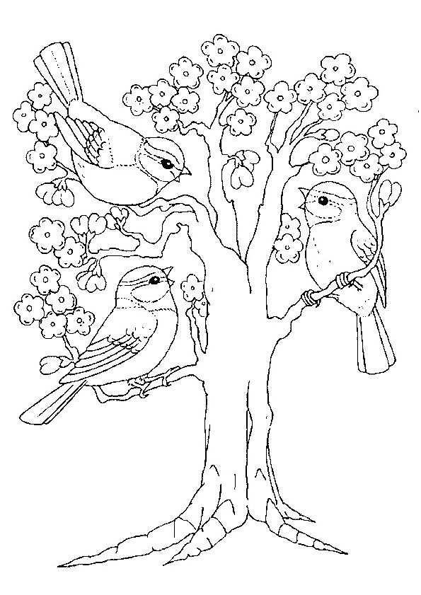 Lente Boom Bloesem Vogels Kleurplaten Adult Coloring Pages
