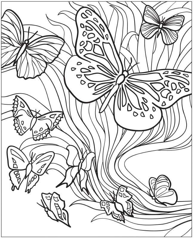 Welcome To Dover Publications Creative Haven Beautiful Butterfly