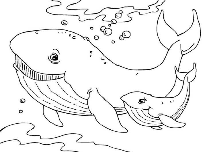 Coloring Page Whales Coloring Picture Whales Free Coloring