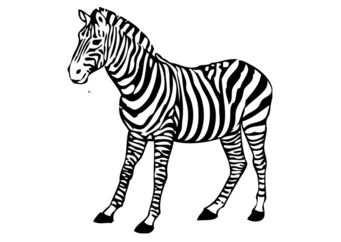 Kleurplaat Zebra Met Afbeeldingen Kleurplaten Zebra S Gratis