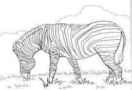 Afbeeldingsresultaat Voor Zebra Kleurplaat Kleurplaten Tekenen