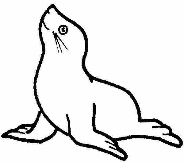 Zeehond Met Bal Op Zijn Neus In De Klas Hebben We Geoefend Met De