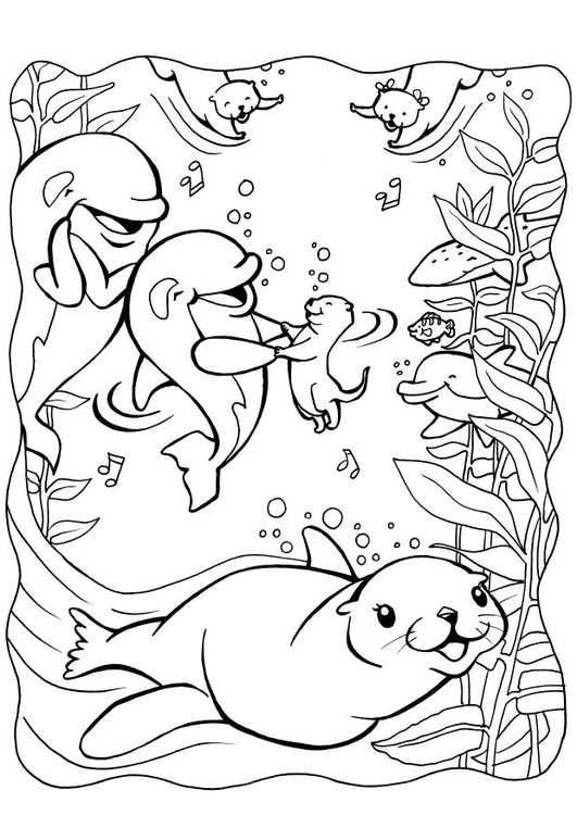 Kleurplaat Dolfijnen Met Zeehond Met Afbeeldingen Kleurplaten