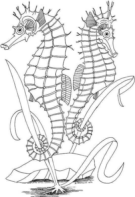 Zeepaardjes Kleurplaten Mandala Kleurplaten Zeepaardje