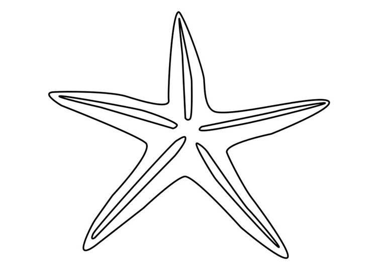 Kleurplaat Zeester Starfish Clipart Seashells Outline Clip Art