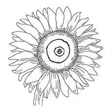 15 Beautiful Sunflower Coloring Pages For Your Little Girl
