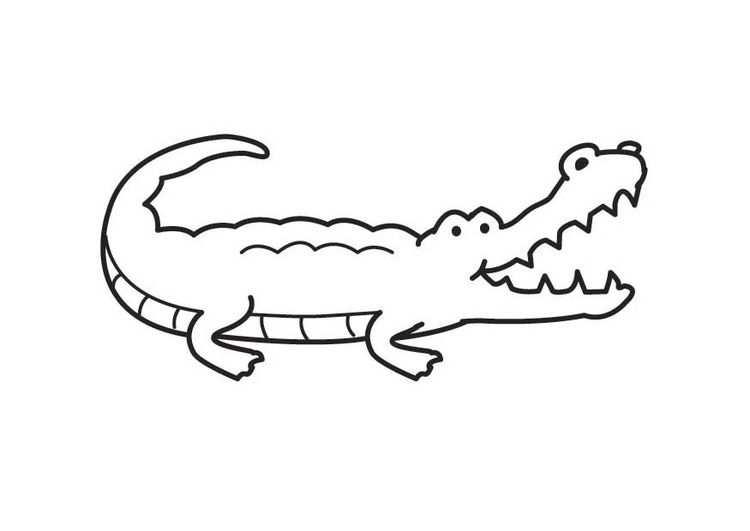Kleurplaat Krokodil Afb 17990 Avec Images Dessin Crocodile
