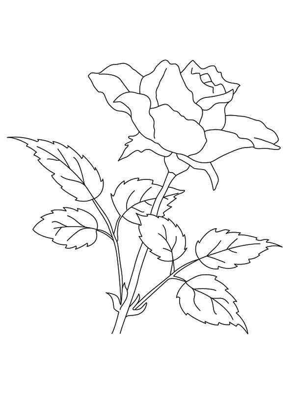 Free Printable Flower Coloring Pages For Kids Rozen