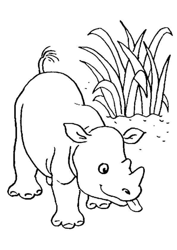 Neushoorn Neushoorn Kleurboek