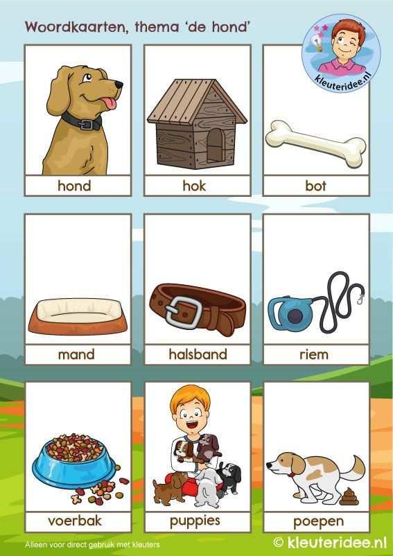 Woordkaarten Thema De Hond Kleuteridee Kindergarten Dog Theme