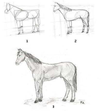 Realistisch Paard Leren Tekenen Met Afbeeldingen Paard
