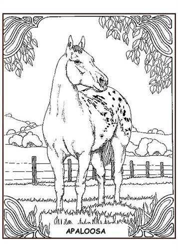 Kids N Fun 63 Kleurplaten Van Paarden