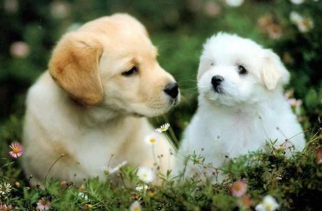 Latest Project Kleurplaten Dieren Puppy Puppies Honden