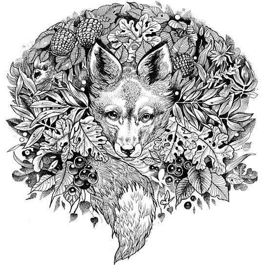 Hidden Fox Kleurplaten Kleuren En Dieren