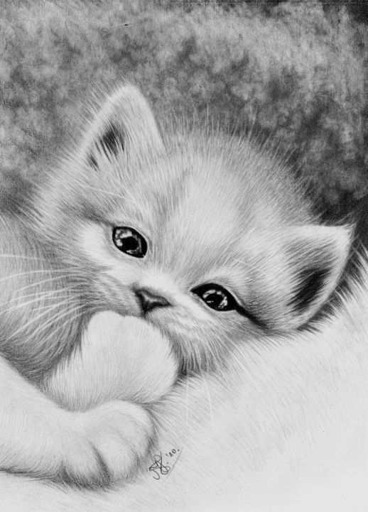 Coloring For Adults Kleuren Voor Volwassenen Katten Tekening