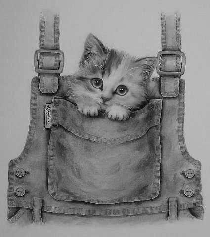 Kitten T Shirt Seashell Dieren Tekenen Katten Tekening