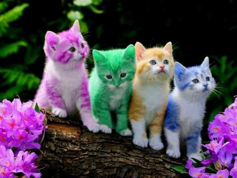 Lovely Kleurplaat Poezen Achtergrond Met Afbeeldingen Mooie