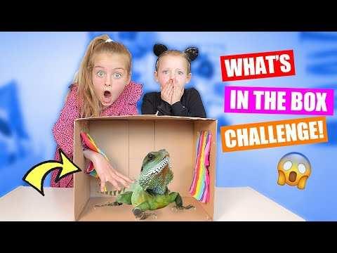 What S In The Box Challenge 2020 Wormen Slijm En Hagedissen