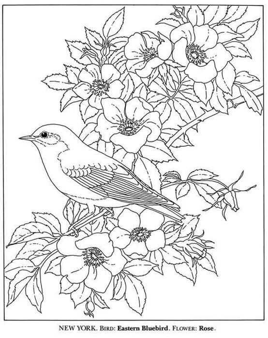 Vogel En Bloemen Kleurplaat Kleurplaten Bloem Kleurplaten En