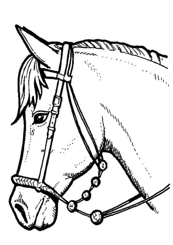 Kleurplaat Paarden Paarden Paarden Paardenhoofd Kleurplaten