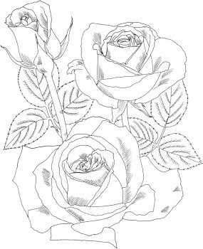 Peace Hybrid Tea Rose Coloring Page Super Coloring Rozen