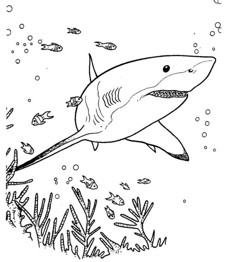 Shark Ocean Coloring Page