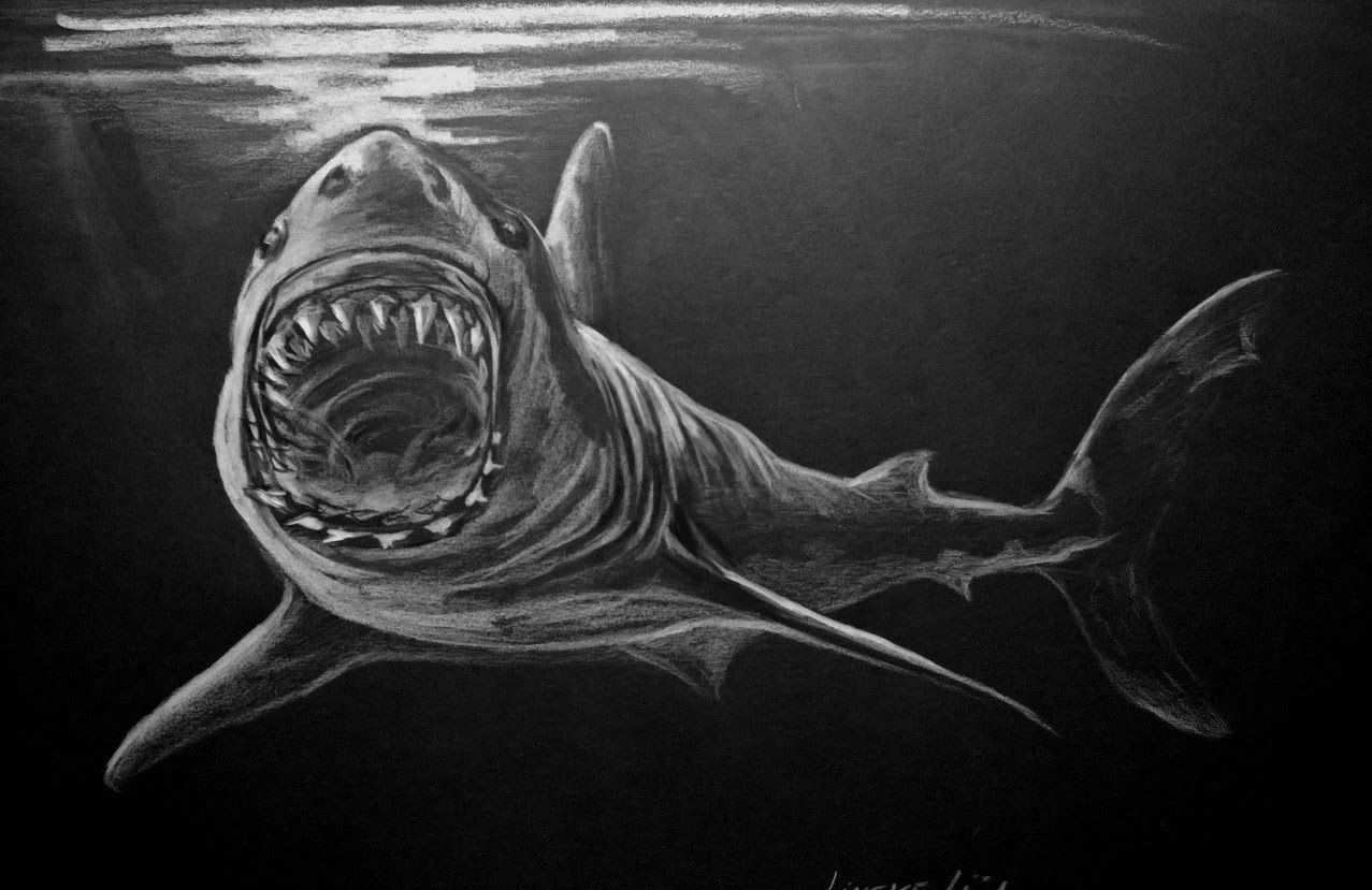 Hoe Teken Je Een Grote Witte Haai Dieren Tekenen 30 Haai