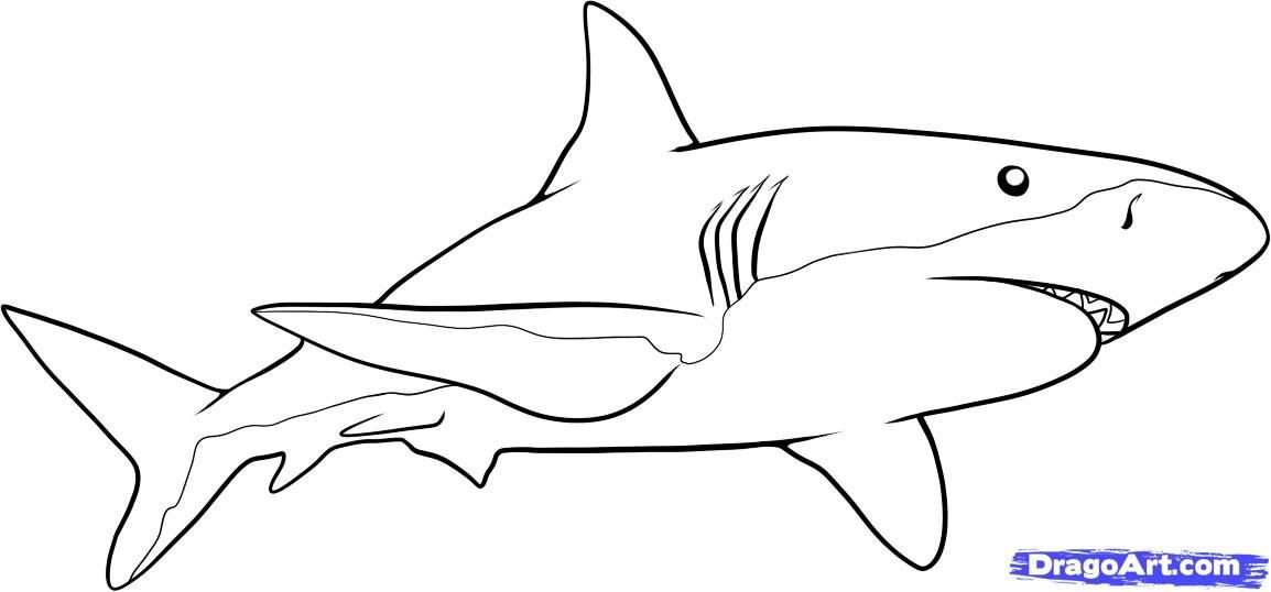 Pin Van Mariska Op Oceaan Haaien Haaienhoed Drawing En Tekenen