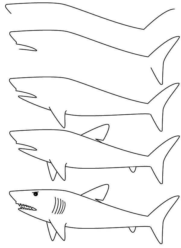 Tekenkaart Haai Haai Tekenen Tekenen Vissen Tekenen