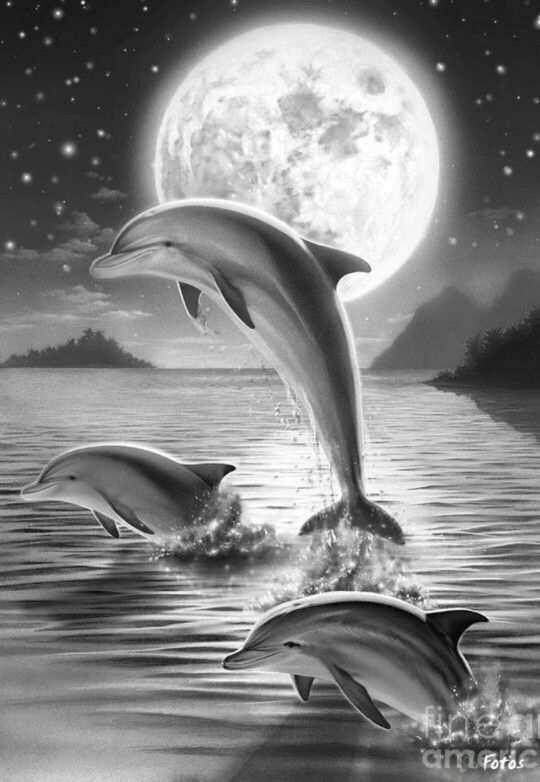 Dolphins In The Moonlight Coloring For Adults Kleuren Voor