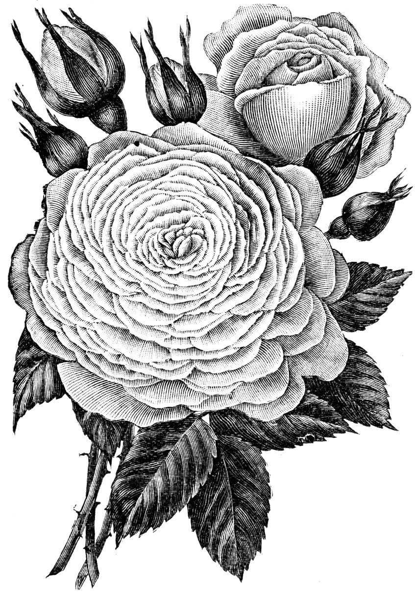 Coloring For Adults Kleuren Voor Volwassenen Bloemen